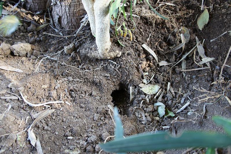 モグラの穴