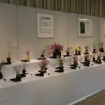 春の野生蘭展2