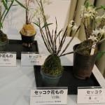 春の野生蘭展3-1jpg